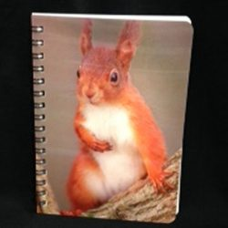 3d-image-notebook-red-squirrel