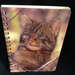 3d-image-notebook-scottish-wild-cat
